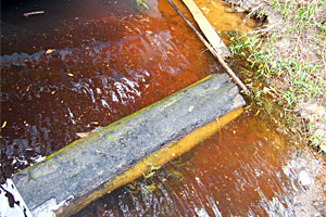 Despite the dark tea coffee color of the Rio Negro the Amazon Rig was deadly for peacock bass in 1 to 10 feet of water during our February – March 2012 fishing trip with Ron Speed Jr's Adventures. The water is stained by vegetation-leached acid conveniently making it unsuitable for mosquitoes!
