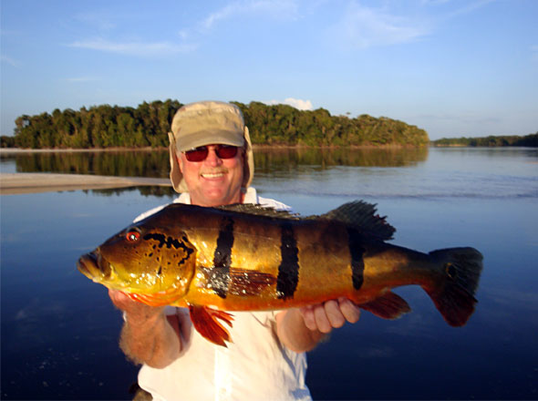 Don Stevens with another large peacock bass caught on a hot day for him, his fishing partner and guide!