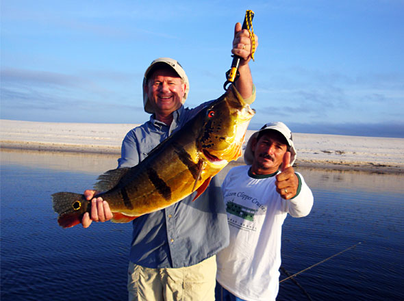 Randy VanDam gets in on the big Peacock Bass action too fishing with expert local guide Alligator!